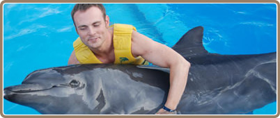 dolphin trainer 33 Prospective students searching for how to become a dolphin trainer: step-by-step career guide found the links, articles, and information on this page helpful.