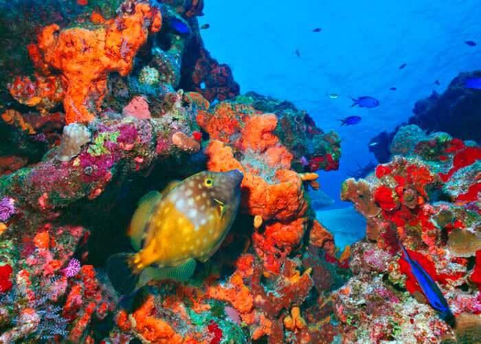 cozumel-tours-submarine