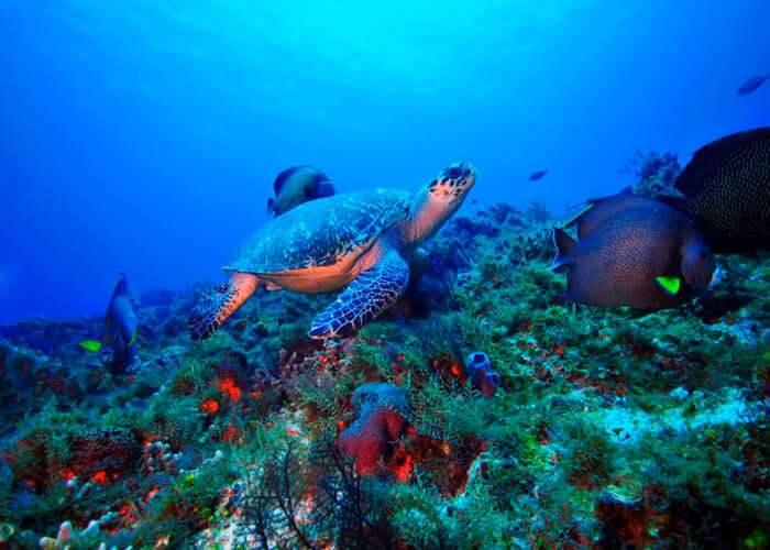 cozumel-submarine-tour-reef