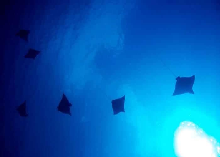 atlantis-submarine-cozumel-view