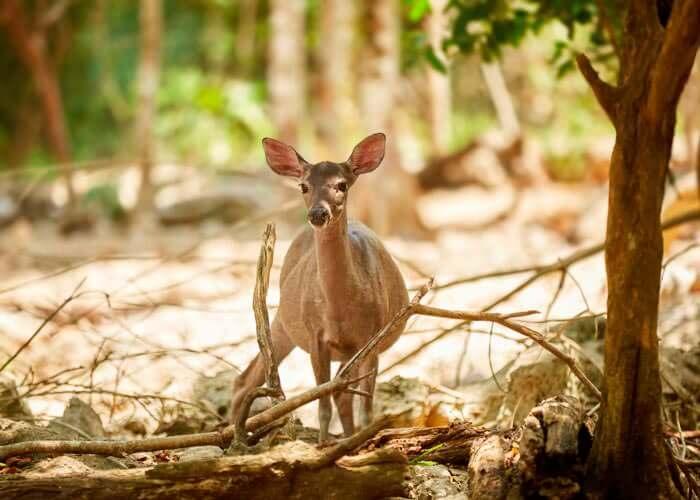 cancuntours-aktunchen-natural-park