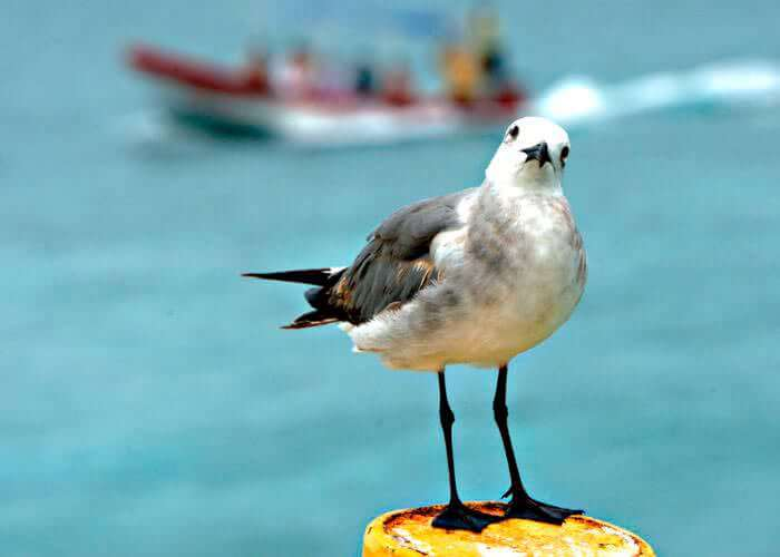 cancun-eco-tours-contoy-island