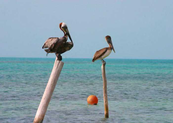 cancun-tour-contoy-island-birds