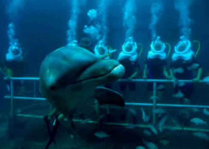 dolphin-swim-undergruond-xelha