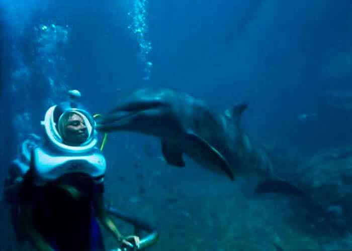 dolphin-trek-in-xelha