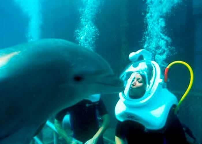 cancuntours-dolphin-trek