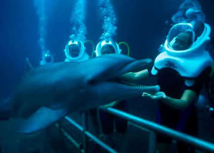 dolphin-trek-xelha