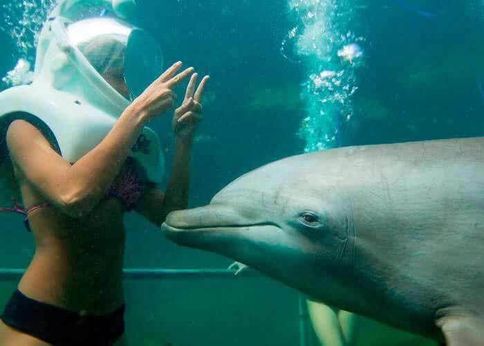 dolphintrek-xelha-tour