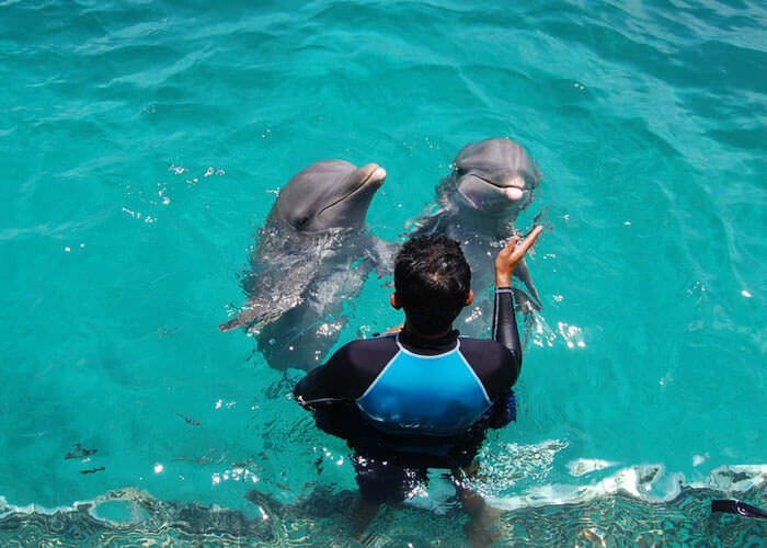 swimmingwithdolphins-islamujeres-and-garrafonpark
