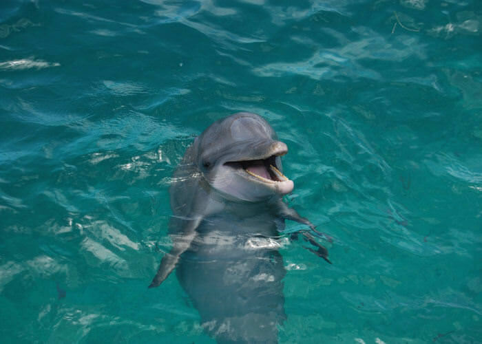 dolphindiscovery-islamujeres-and-garrafonpark-tour