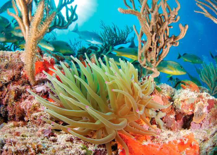 cancun-activities-snorkel-akumal-inlet