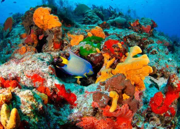 rivieramaya-snorkel-tours-inlet-cenotes
