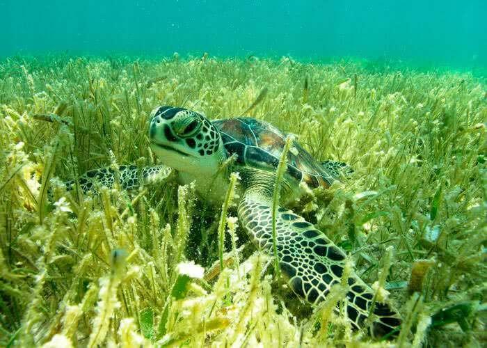 rivieramaya-tours-snorkel-mayanadventure