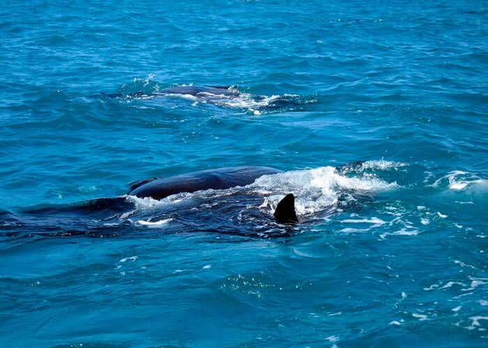 cancun-activities-swim-with-whale-shark
