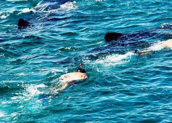 whale-shark-tours-cancun