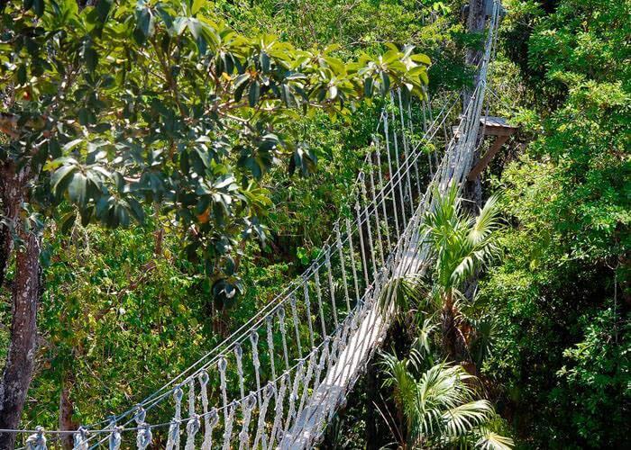 extreme-tours-cancun-selvatica-bridge