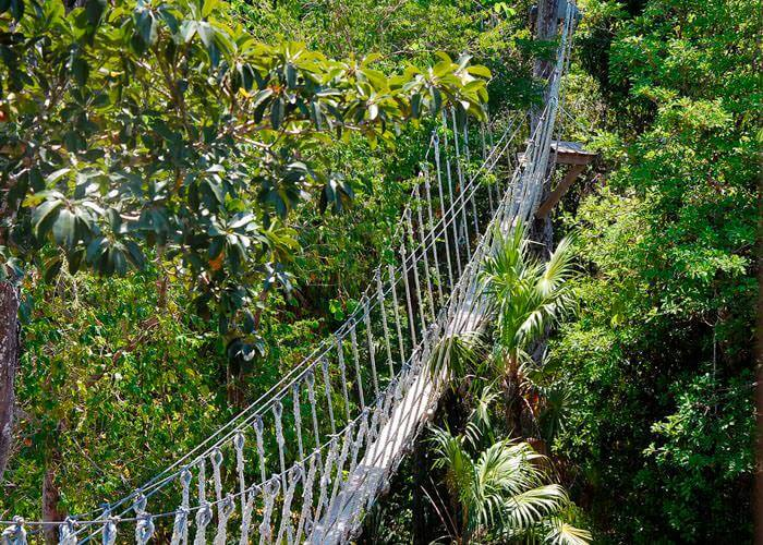 my canopy tour The first activity will be the extreme canopy tour in order to do this the staff will  equip each guest with harnesses, security pulleys, helmets and gloves, our.