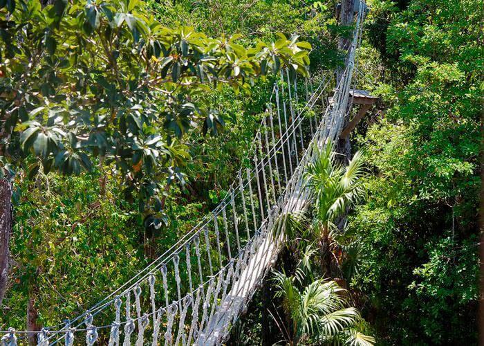 cancuntours-selvatica-canopy-bridges