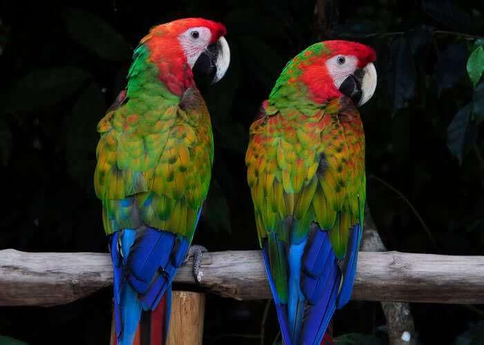 cancun-adventure-tour-selvatica-birds