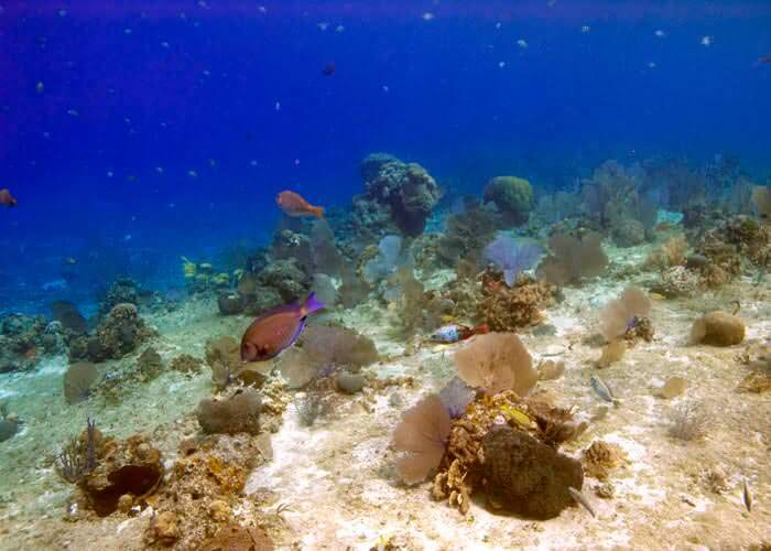 cancun-activities-cozumel-snorkel