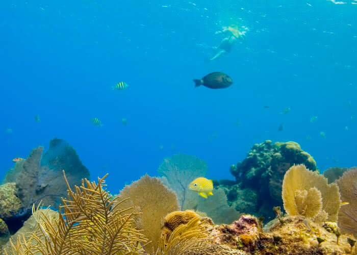 thingstodo-cozumel-snorkel
