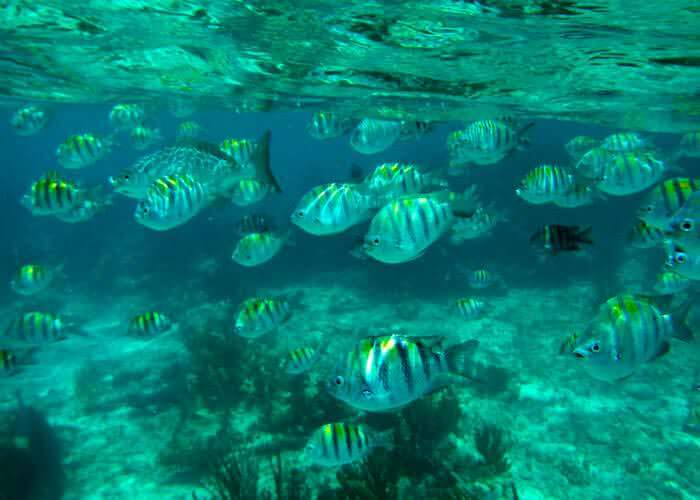 snorkeling-cancun-reef