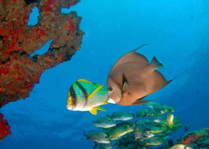 cancun-snorkel-tours-fish