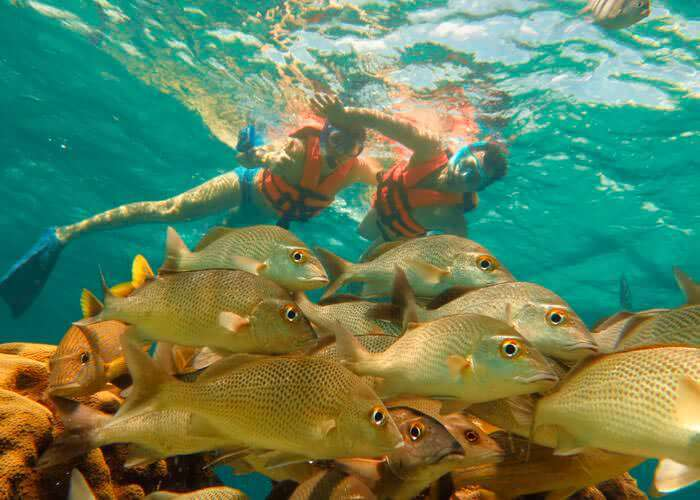 cancun-snorkeling-tours-coral
