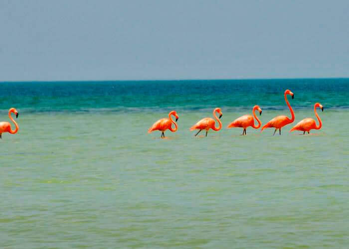 tours-in-cancun-holbox