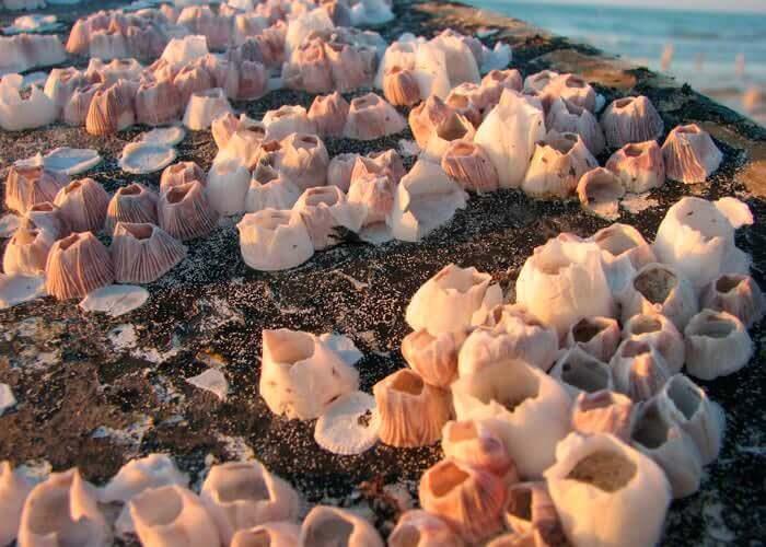 holbox-tour-seashell