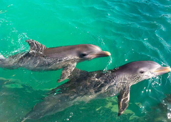 cancun-tours-swimwithdolphins-and-tulum
