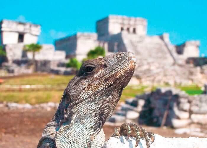 mayan-ruins-tulum-rappel-zipline-from-rivieramaya