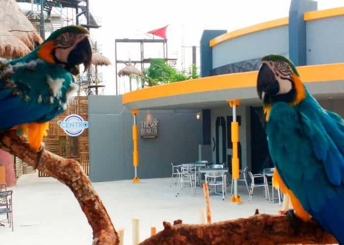 cancun-parks-ventura-macaw