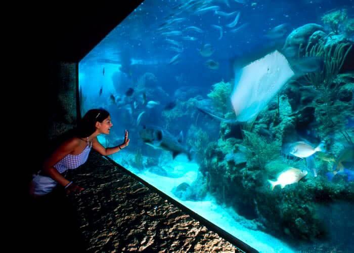 xcarettour-tickets-aquarium