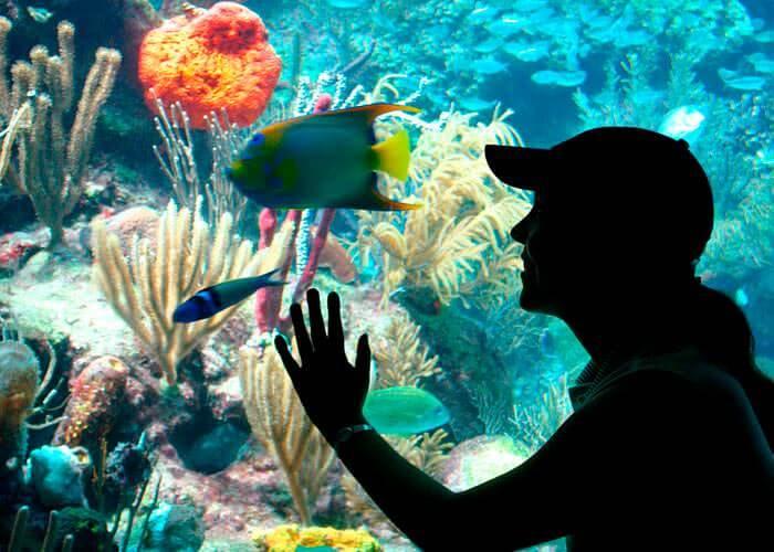 riviera-maya-tour-xcaretpark-aquarium