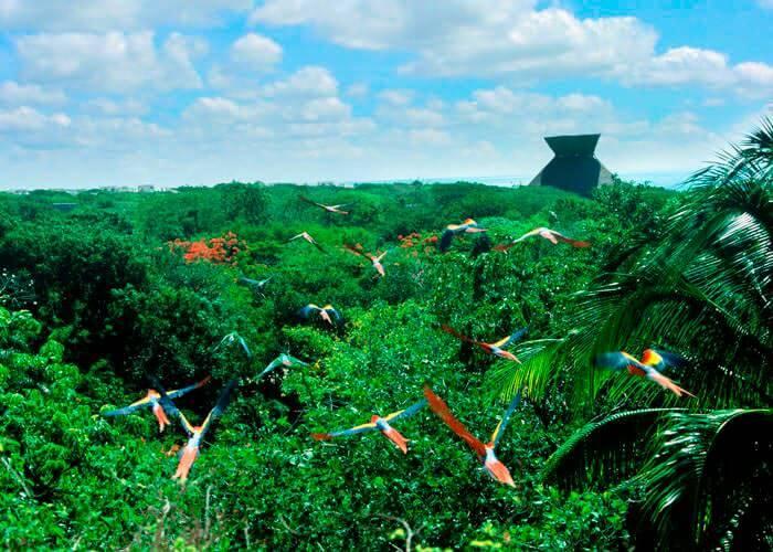 xcaret-tour-playadelcarmen-macaws