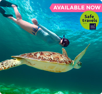 Snorkel with turtles and subaquatic museum isla mujeres