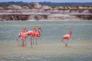 flaingos at Rio Lagartos y Las Coloradas