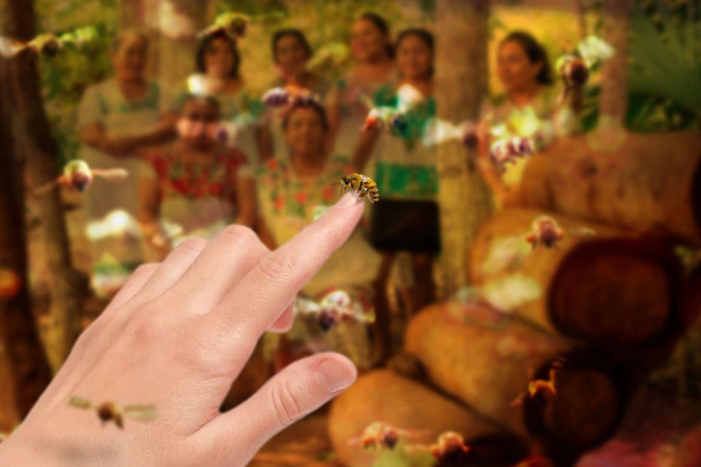 melipona bee in human fingers
