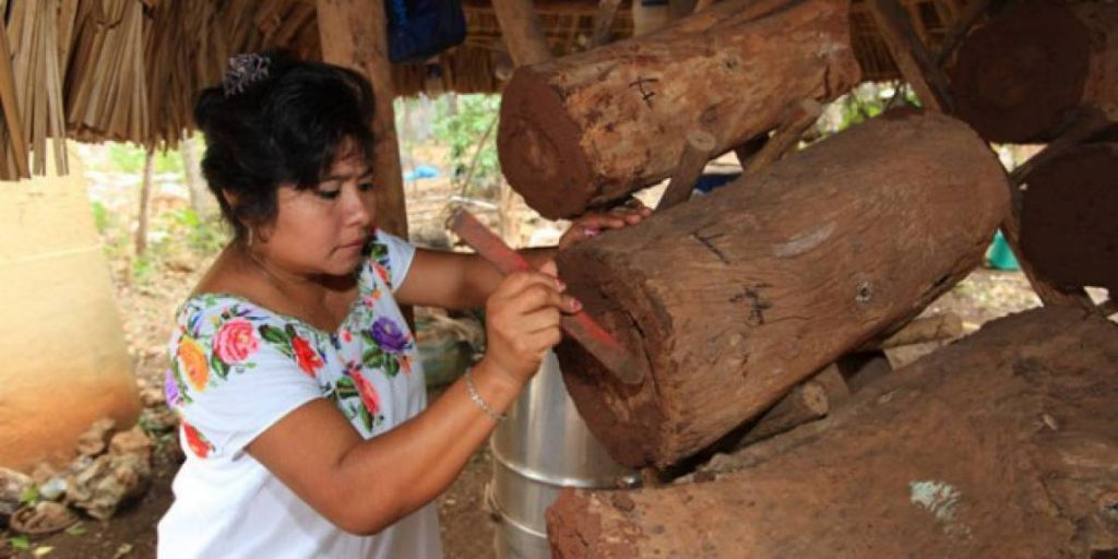 Mayan woman carving trunk to build shelters for Melipona bees
