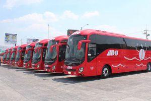 ADO bus fleet for public transport