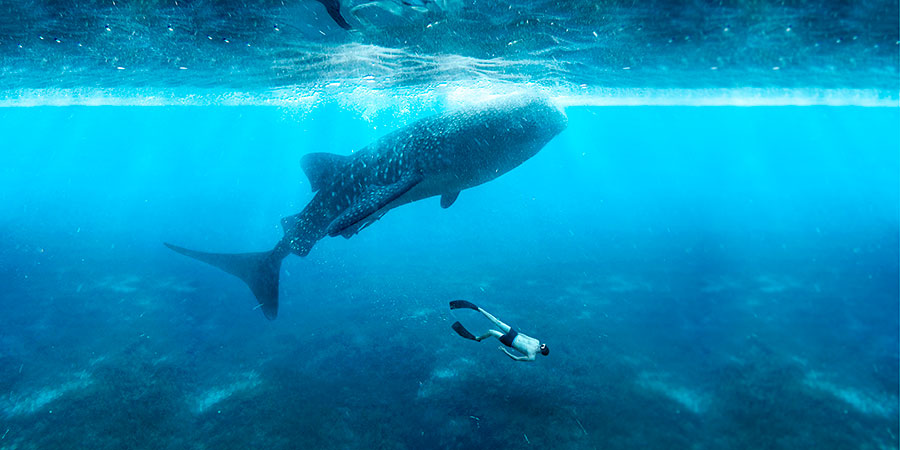 swiming in th sea with great fish
