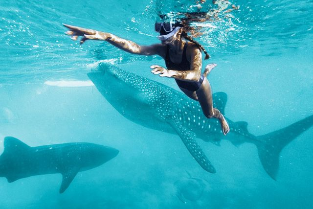 young woman swiming with the whale shark