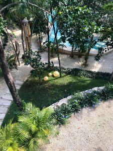 exotic gardens at tulum