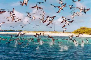 contoy iland birds