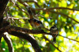 birds at isla contoy